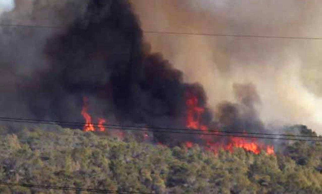 פנסיון האגודה פתוח לחיות מחמד של תושבים שנאלצו להתפנות בעקבות השריפות - אגודת צער בעלי חיים בישראל