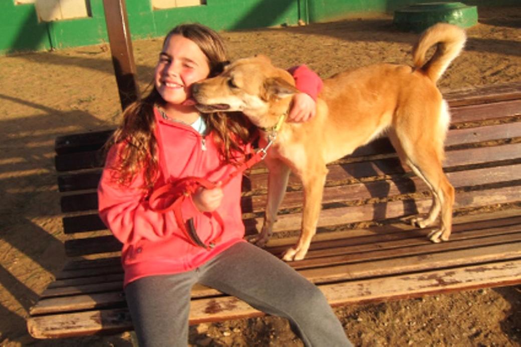 """מאיה בר-לבב: """"אין דבר יותר כיפי מאשר לעזור ולפנק כלבים שאין להם בית"""""""