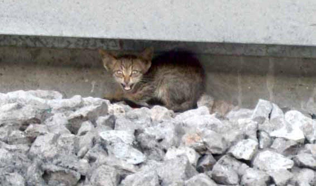 החתולה קרובה לפסי הרכבת