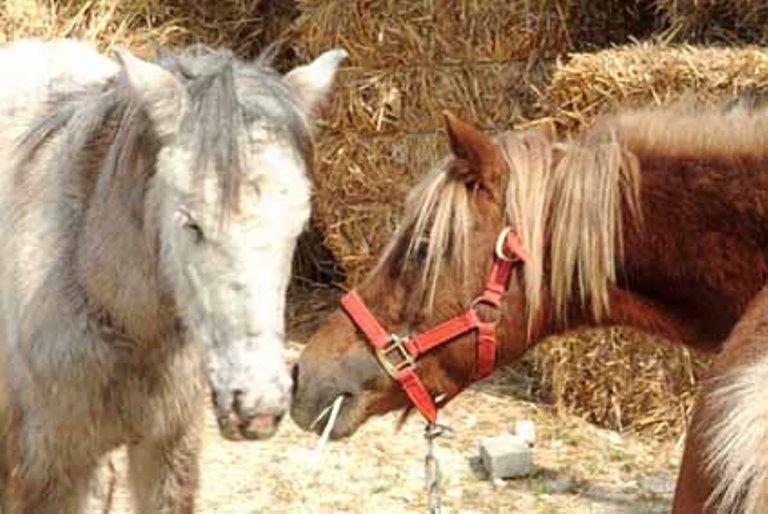 מקום מוגן. הסוסים באורוות האגודה