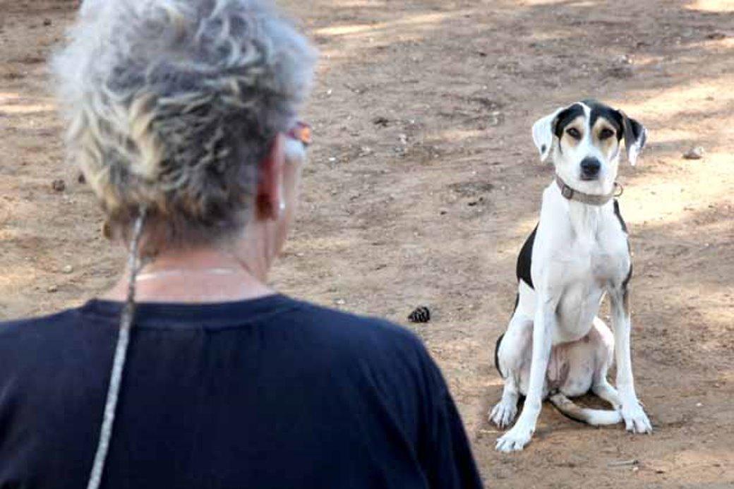 טיפול קוגניטיבי התנהגותי (CBT) בפוביה מבעלי חיים