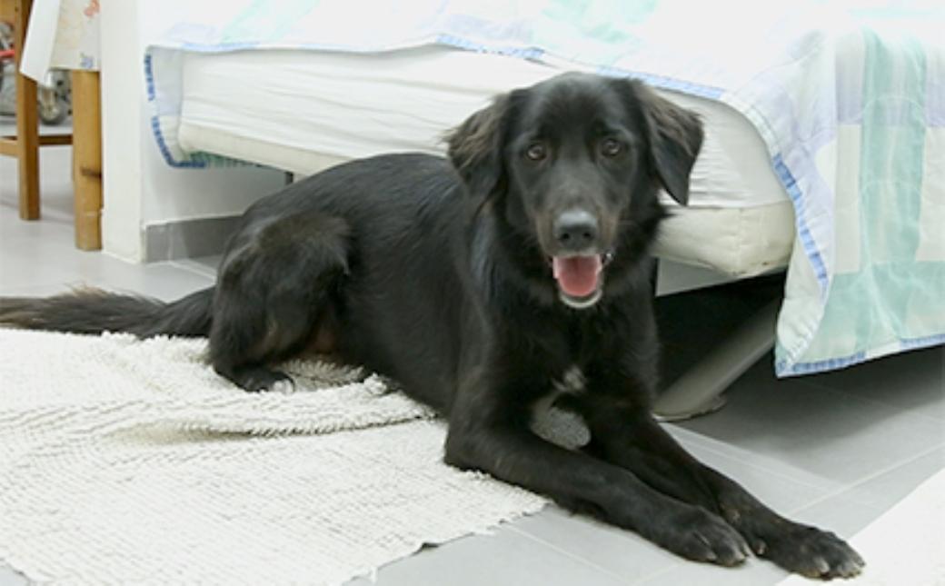 גם בעלי דירות קטנות יכולים לגדל כלב גדול