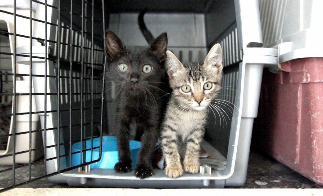 שני חתולים שנקלעו למנועי רכבים