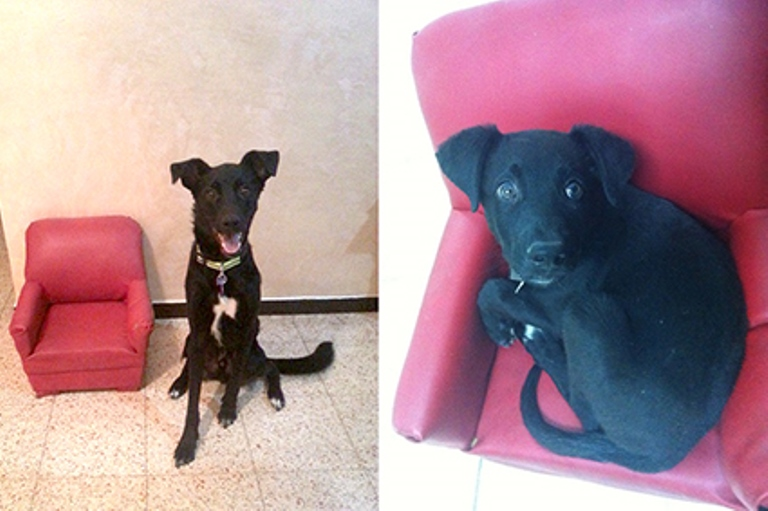 A significant difference: the dog, Haver, at the age of three months and at two years old.