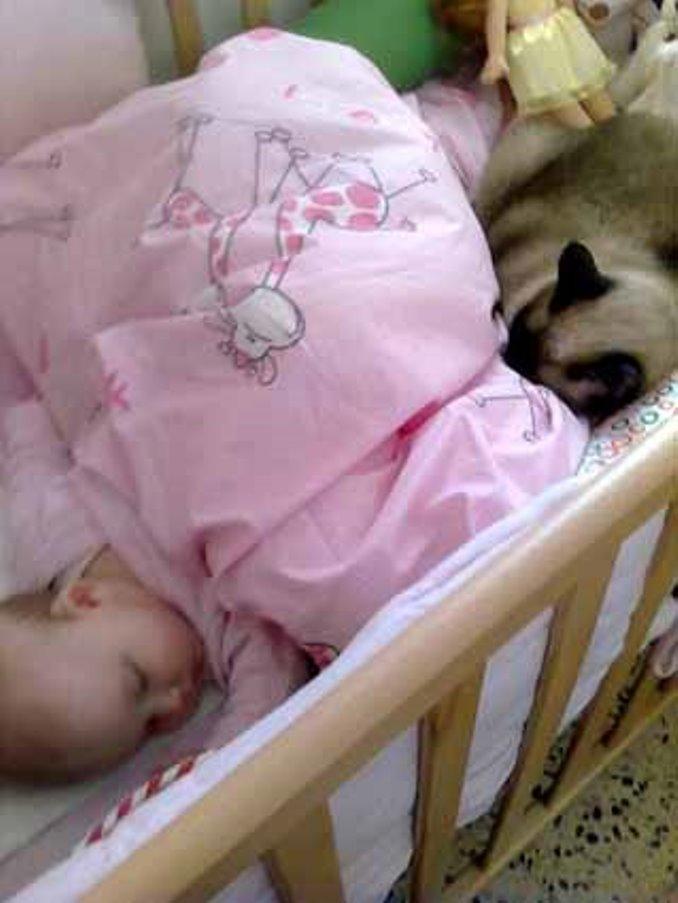 """תינוק וחתול. צילום: ד""""ר איה פרי"""