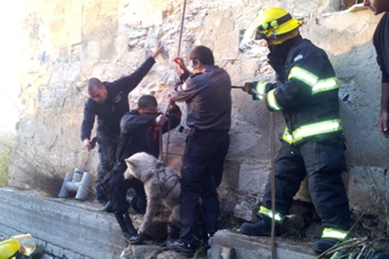 The dog is safely rescued from the pit