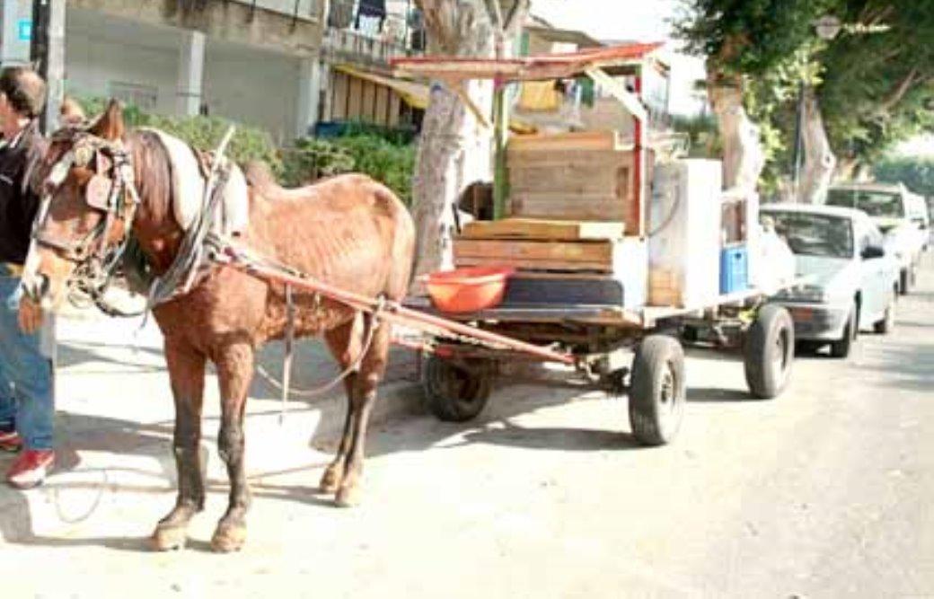 סוס אומלל רתום לעגלה