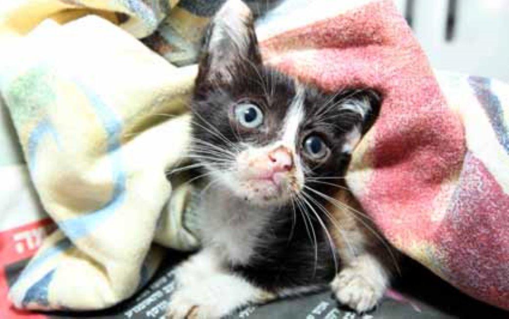 החתולה מתאוששת במרפאת האגודה
