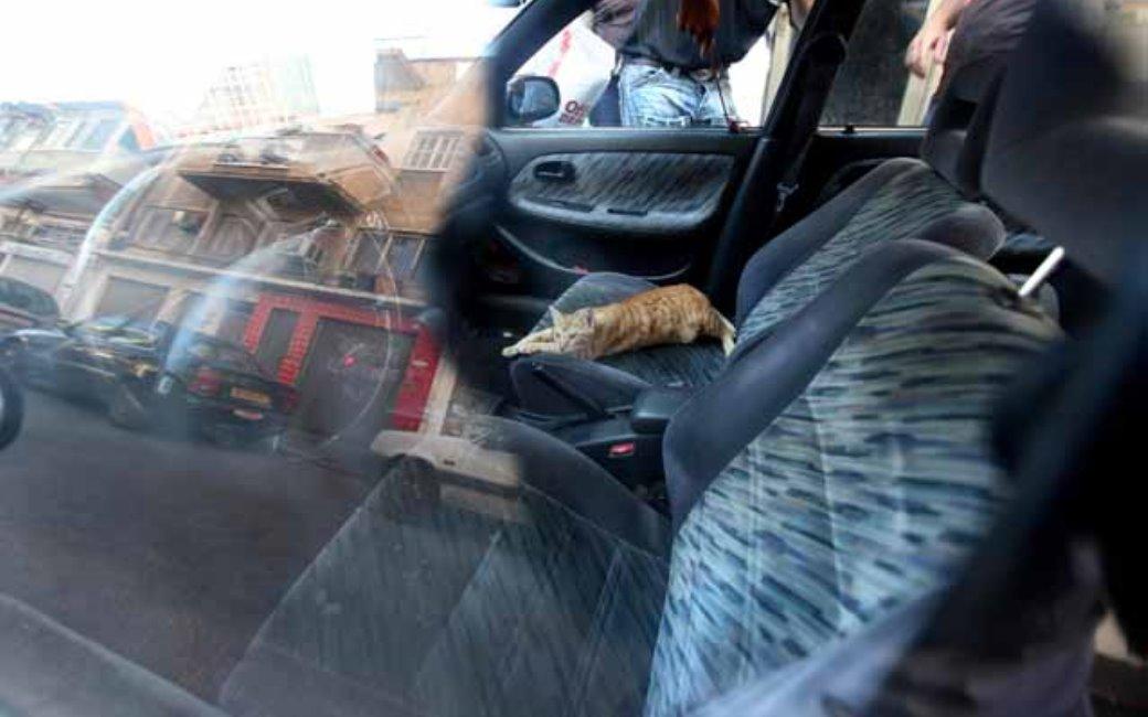 החתול בתוך הרכב הלוהט
