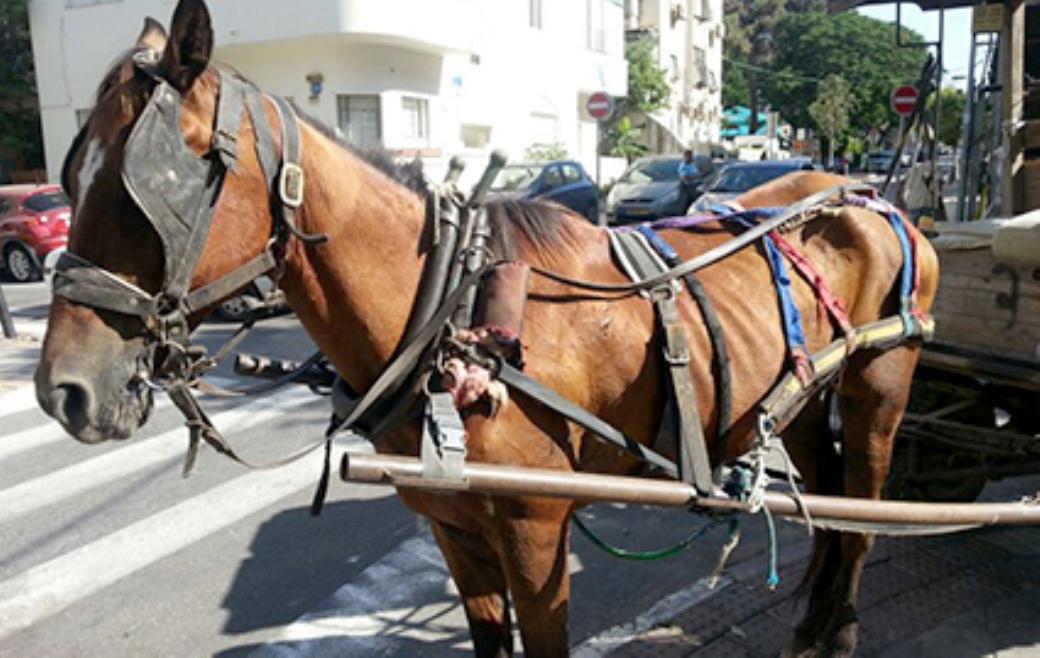 סוס רתום לעגלה