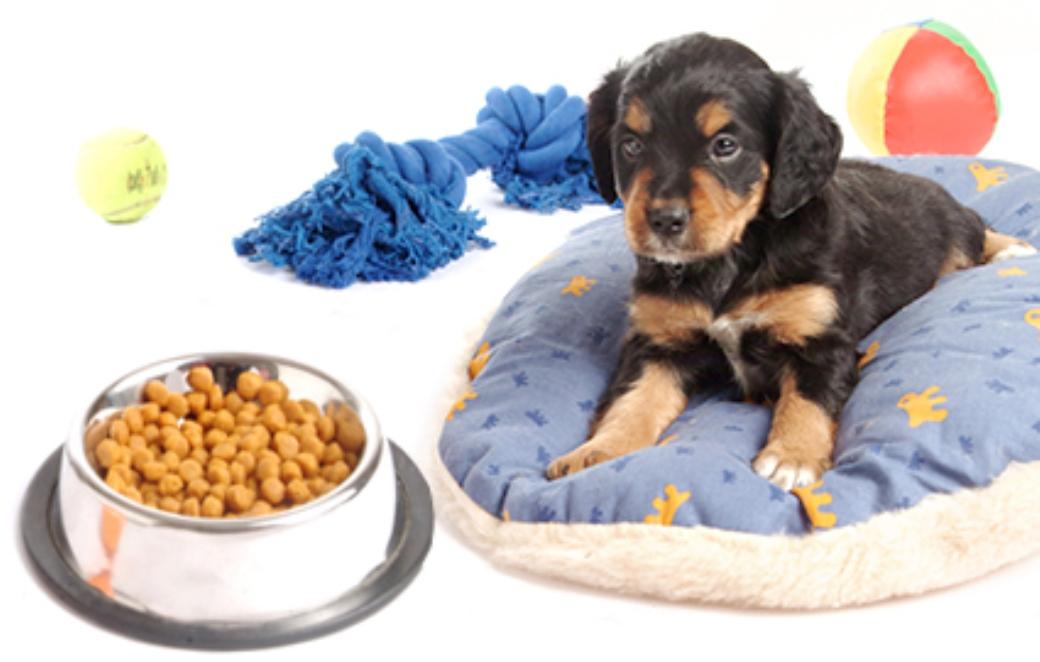 תרומות מזון לכלבים