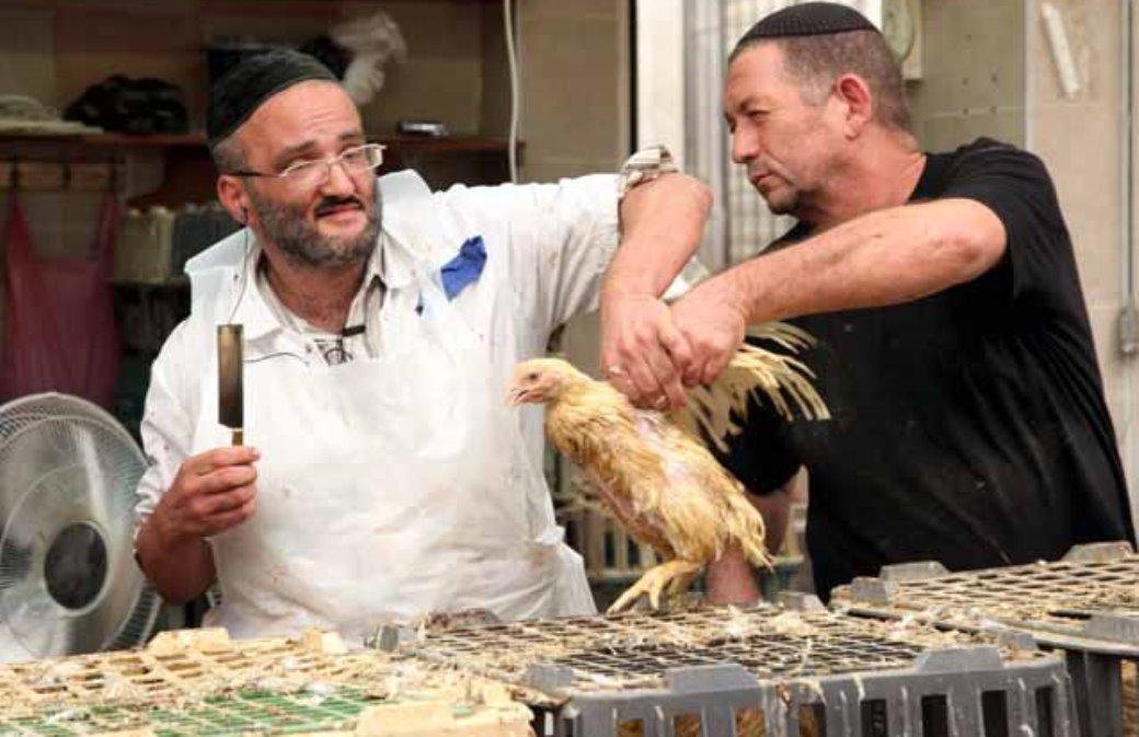 קמפיין להמרת מנהג שחיטת התרנגולים במתן צדקה לנזקקים