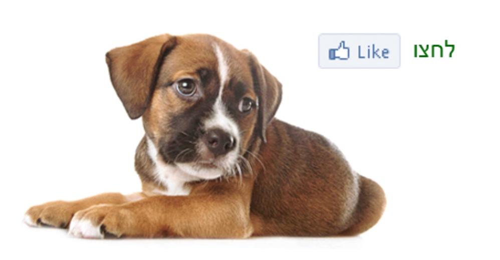 פעילות מיוחדת בדף הפייסבוק של האגודה