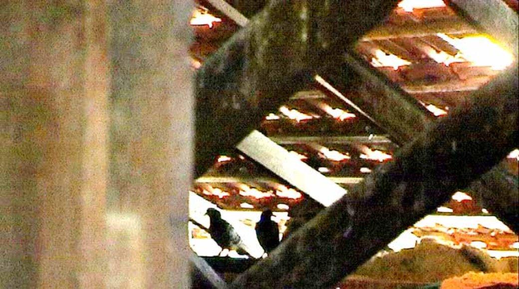 היונים שנלכדו תחת גג בניין
