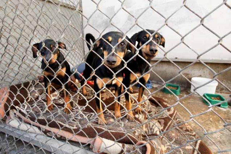 ממתינים לבית חם. שלושה מתוך 13 הכלבים שננטשו באגודה