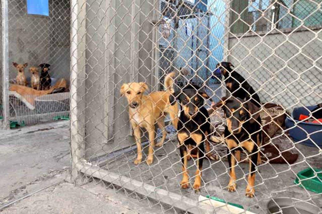 13 כלבים בני משפחה אחת שננטשו באגודה