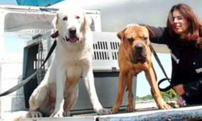 שני הכלבים מאילת בדרכם לאגודה