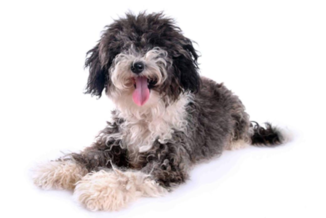 כלבים וחתולים ימסרו לאימוץ רק לאחר שעברו ניתוח עיקור או סירוס