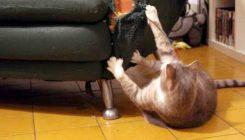 חתול משחיז ציפורניים