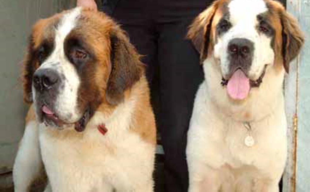 כלבים גזעיים נטושים