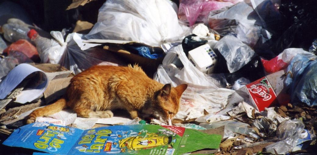 חתול רחוב חסר בית