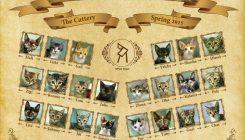 Kittens Class Photo - Graduates of Spring 2015