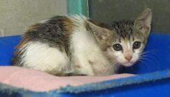 גורת חתולים שנלכדה במלכודת דבק