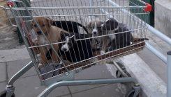 עיקור וסירוס אגודת צער בעלי חיים בישראל