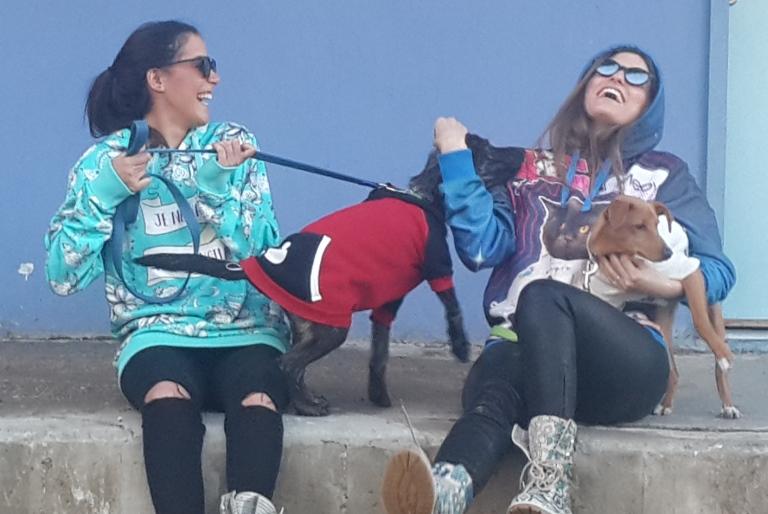 איט גירלז – It Girls - אגודת צער בעלי חיים בישראל