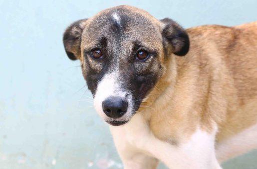 מולי כלבה לאימוץ - אגודת צער בעלי חיים בישראל