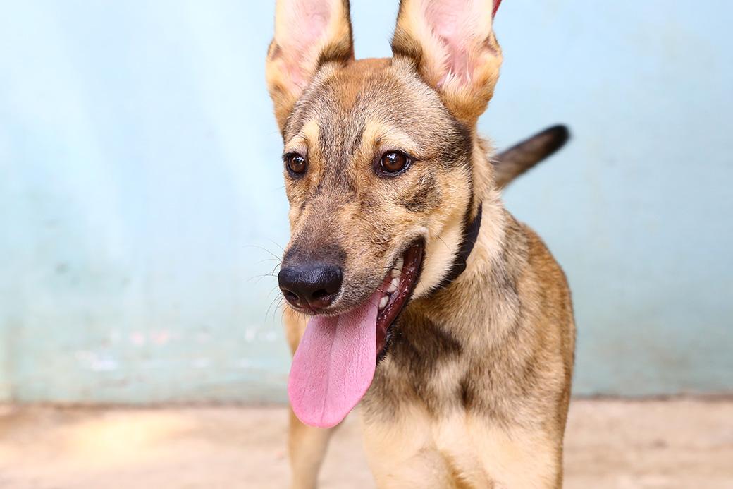 סטיב כלב לאימוץ אגודת צער בעלי חיים בישראל