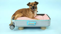עבודות יצירה לכלבים וחתולים, DIY – אגודת צער בעלי חיים בישראל