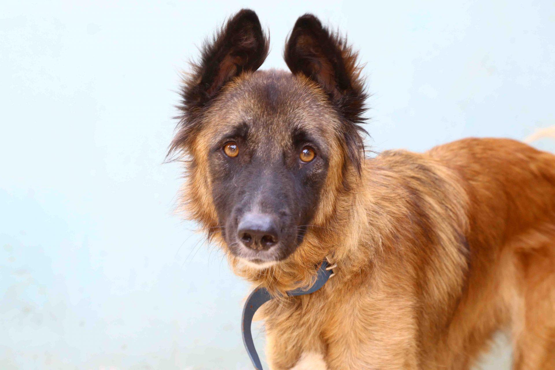 דייזי כלבה לאימוץ אגודת צער בעלי חיים בישראל
