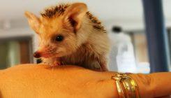 קיפוד - אגודת צער בעלי חיים בישראל