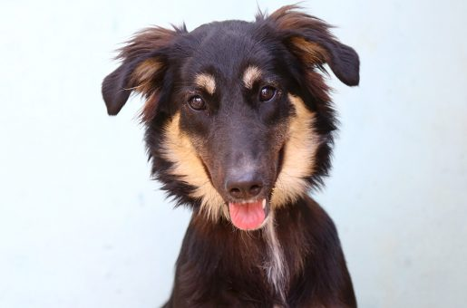 ליידי כלבה לאימוץ אגודת צער בעלי חיים בישראל