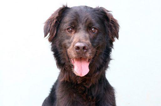 בובו כלב לאימוץ אגודת צער בעלי חיים בישראל
