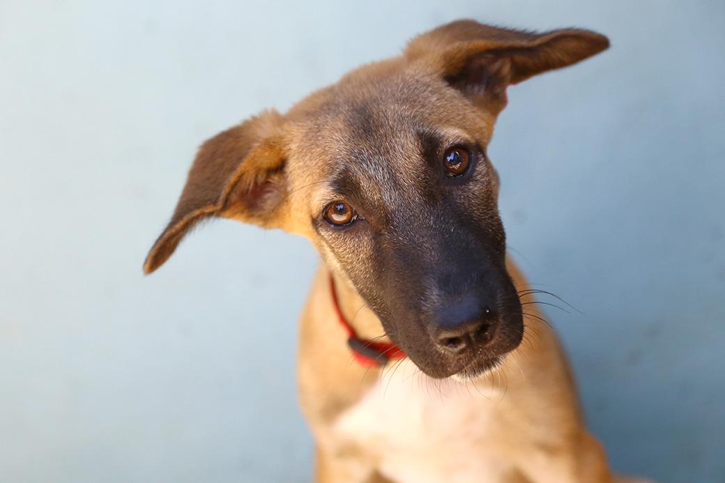 שירו כלב לאימוץ אגודת צער בעלי חיים בישראל