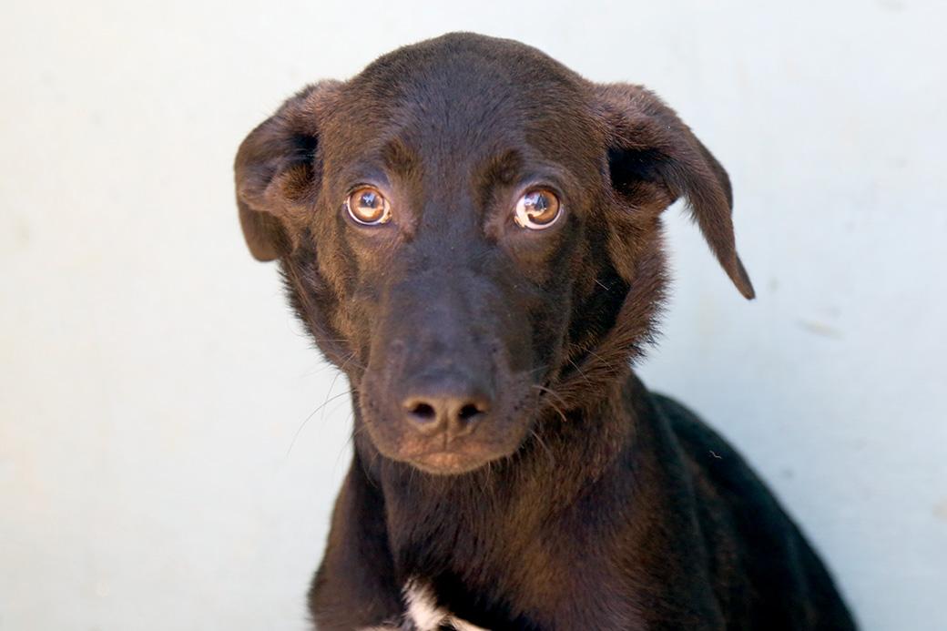 קלי כלבה לאימוץ אגודת צער בעלי חיים בישראל