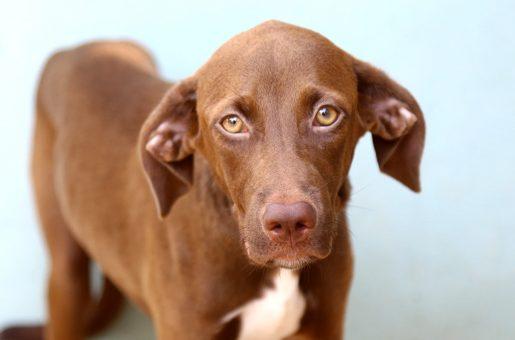 גוצ'י כלבה לאימוץ אגודת צער בעלי חיים בישראל