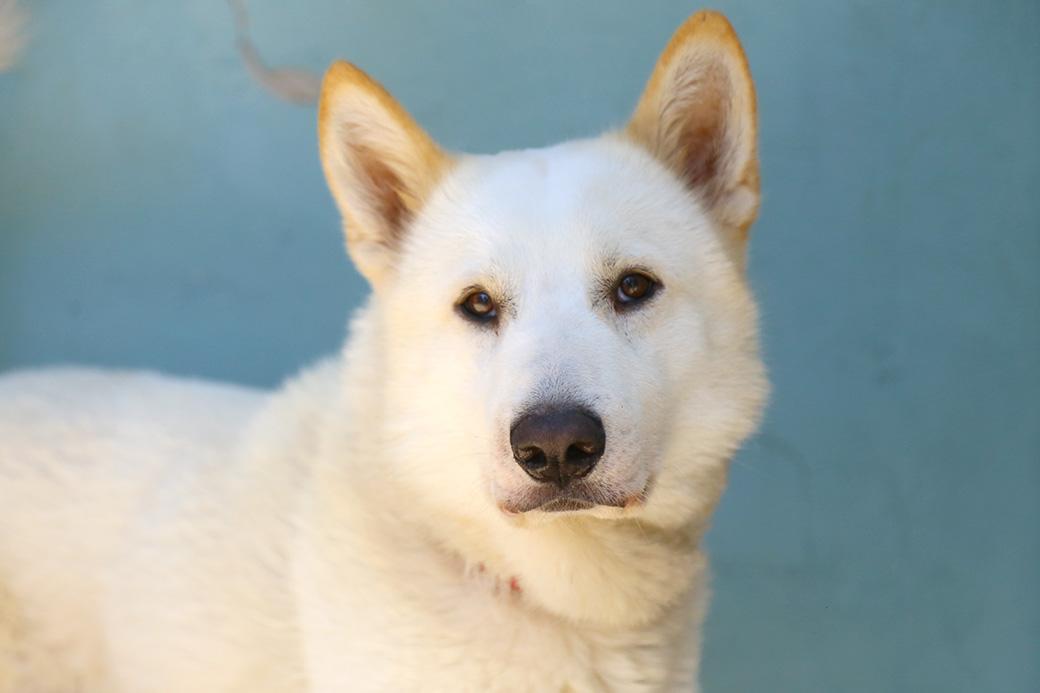 טאקי כלב לאימוץ אגודת צער בעלי חיים בישראל