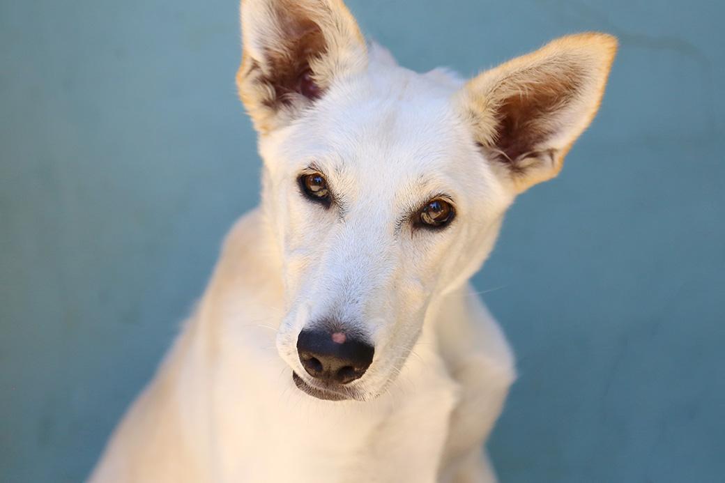 מיסטי כלבה לאימוץ אגודת צער בעלי חיים בישראל