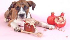 שנה טובה - אגודת צער בעלי חיים בישראל