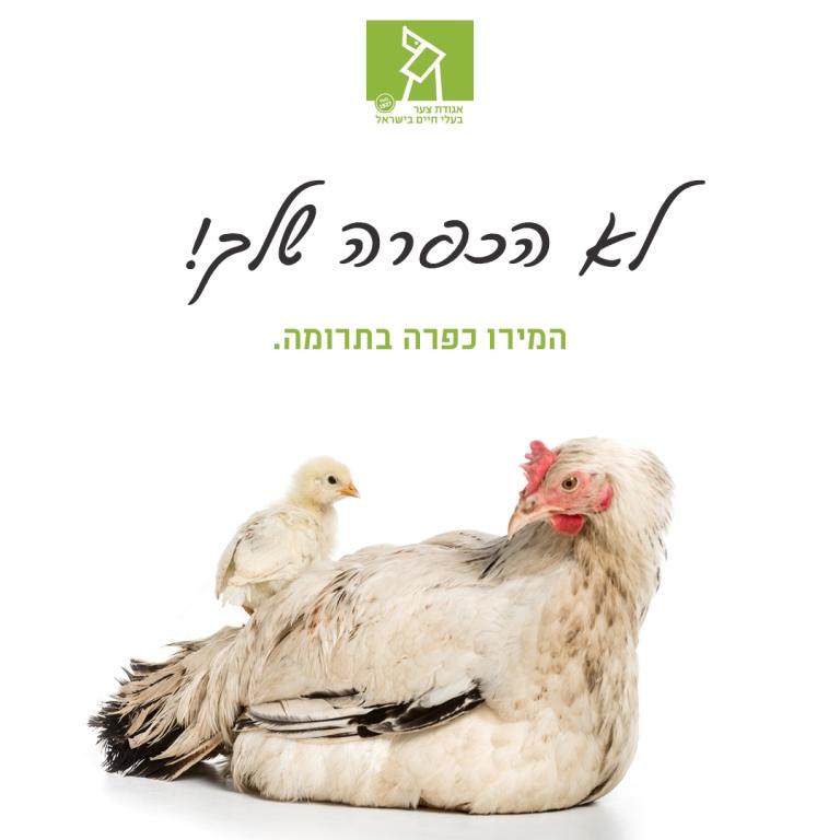 פדיון מנהג הכפרות במתן צדקה - אגודת צער בעלי חיים בישראל