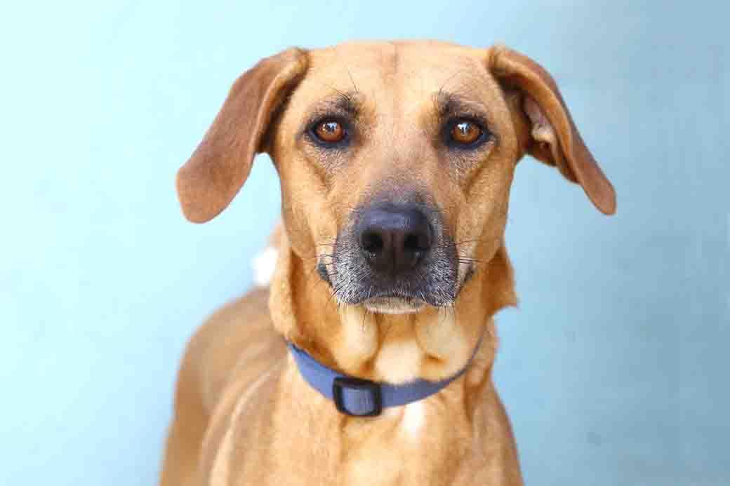טופי כלבה לאימוץ אגודת צער בעלי חיים בישראל
