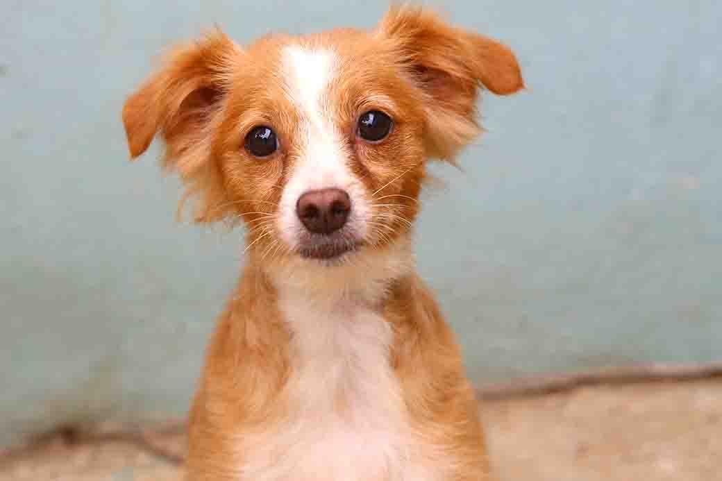 מרי כלבה לאימוץ אגודת צער בעלי חיים בישראל
