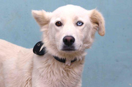 מילקי כלבה לאימוץ אגודת צער בעלי חיים בישראל