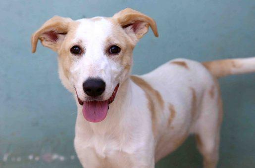 לאו כלב לאימוץ אגודת צער בעלי חיים בישראל