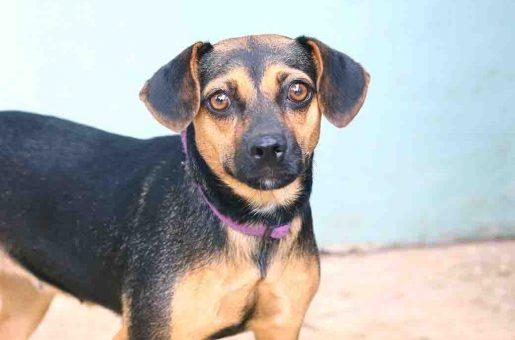 לאקי כלבה לאימוץ אגודת צער בעלי חיים בישראל