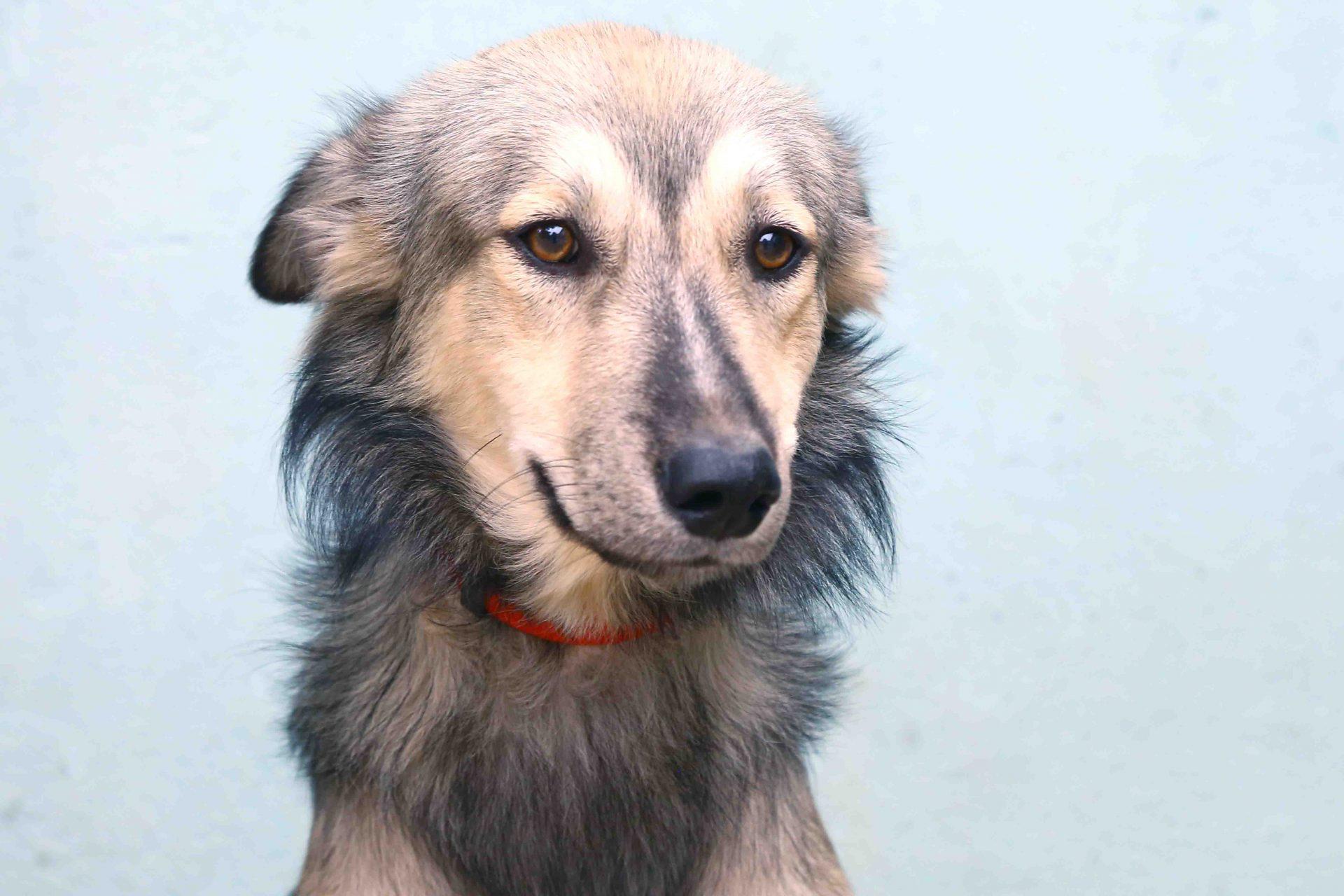 ג'ין כלב לאימוץ אגודת צער בעלי חיים בישראל