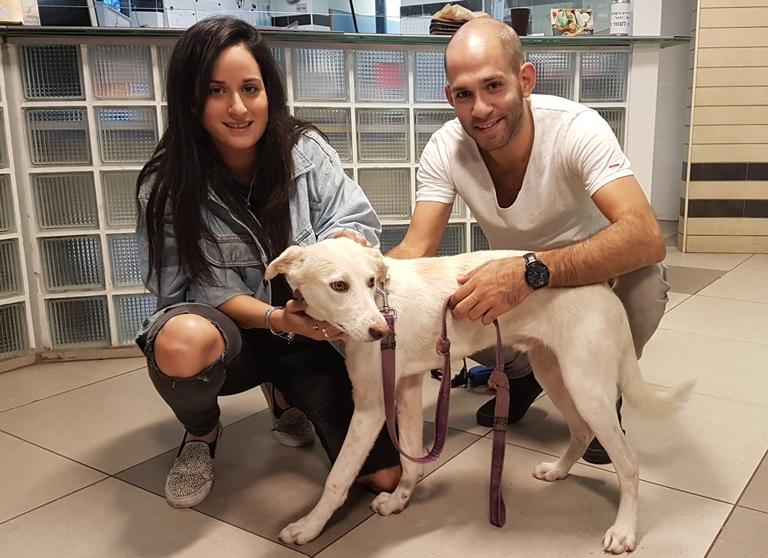 שיקום כלב – אגודת צער בעלי חיים בישראל